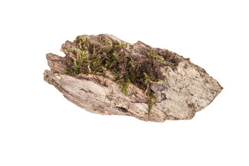 stump with moss isolated on white background