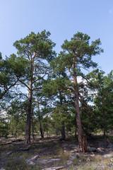 wild untouched forest