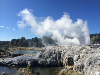 a natural geyser in te puia new zealand
