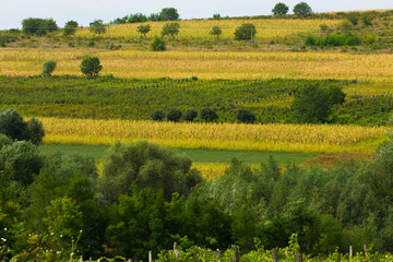 Agricultural fields, vibrant toning