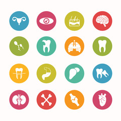 Human anatomy  icons set Circle Series - eps.10