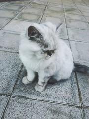 gato callejero abandonado