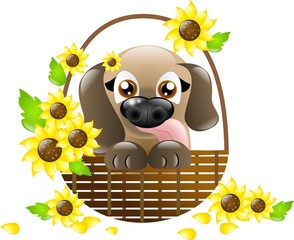 Cute puppy in basket with sunflowers