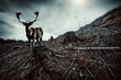 Deer stance
