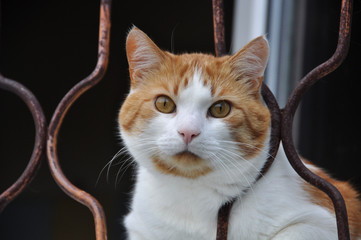 White and red cat sitting on the window sill and looking through