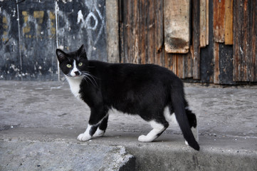 Black and white cat standing on the porch of a multistory buildi