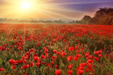"""Постер, картина, фотообои """"sunset over poppy field"""""""