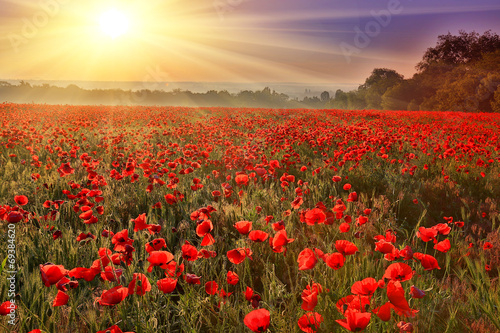 Deurstickers Weide, Moeras sunset over poppy field