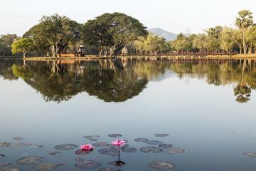 Teich mit Seerosen in Sukhothai