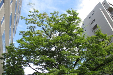 Trees and buildings