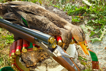 Gun, duck and hunting ammunition