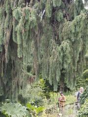 Jardín en Ginebra
