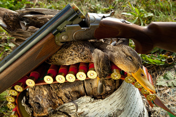 Gun, duck and hunting ammunition