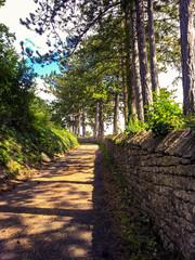 Chemin bucolique