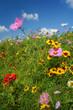 canvas print picture - Bunte Blumenwiese im Sonnenschein, blauer Himmel