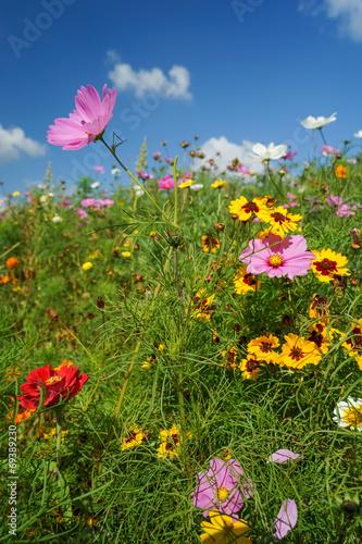 canvas print picture Bunte Blumenwiese im Sonnenschein, blauer Himmel