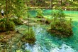 canvas print picture - Spring of Kamnik Bistrica, Slovenia (summer 2014)