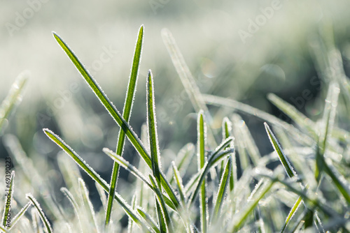 Frozen morning grass