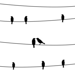 Birds on the wires2