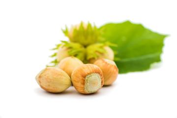 green hazel nut
