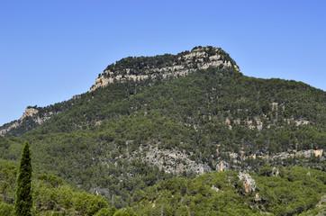 Cumbre de una montaña cubierta de pinos y la roca madre