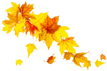 Colored autumn leaves falling isolated on white