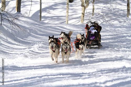 Aluminium Wintersporten sleddog corsa con i cani da slitta sport invernale
