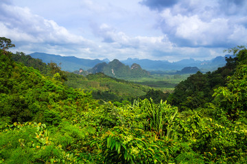 Rainforest of Khao Sok National Park in Thailand