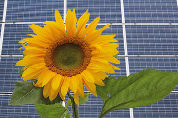 Solartechnik und Natur