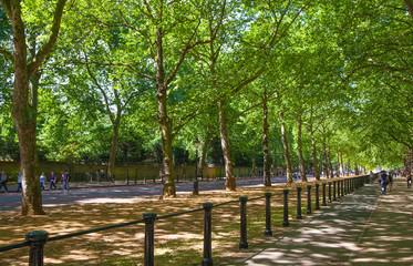 Green park and Queen's garden wall
