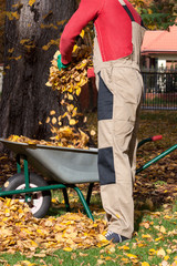 Throwing leaves into wheelbarrow
