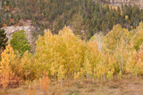 foliage at san juan skyway in colorado poster