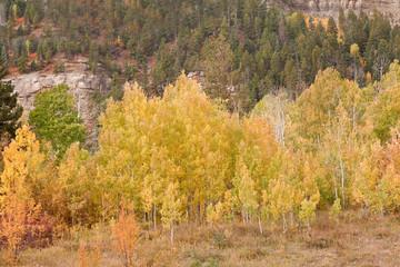 foliage at san juan skyway in colorado