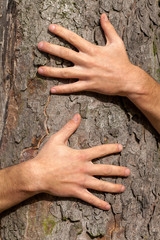 Hands on tree