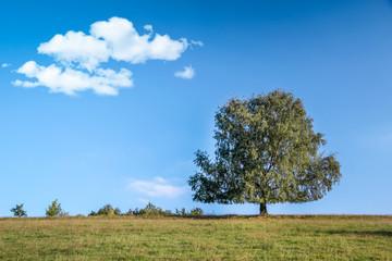 Großer Baum im Sommer