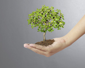 Holding a tree