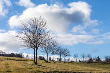 Baumreihe im Winter