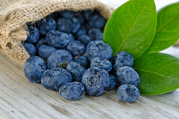 blueberries in burlap bag with leaves