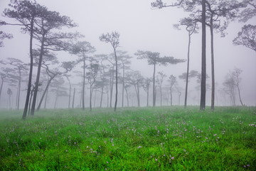 Misty in forest