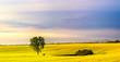 Obrazy na płótnie, fototapety, zdjęcia, fotoobrazy drukowane : Wiosenne pole kwitncego rzepaku