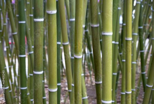 In de dag Bamboo Bamboo Wallpaper