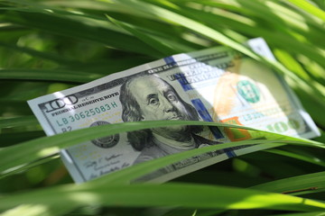 USD banknote in the grass