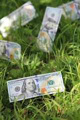USD banknotes on the grass