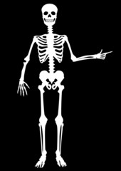Menschliches Skelett, zeigend, stehend, weiß auf schwarz
