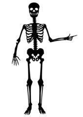 Menschliches Skelett, zeigend, winkend, schwarz, Vektor