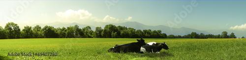 cow - 69407280