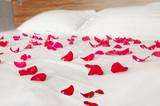 Rose petals on white bedding - romantic bedroom scenery