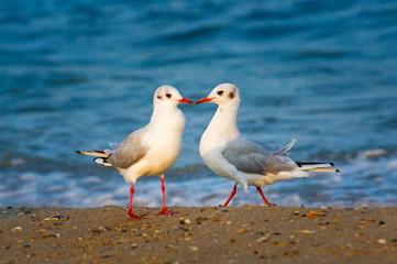 Two seagulls on the sea coast