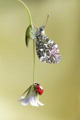 Butterfly & Ladybird