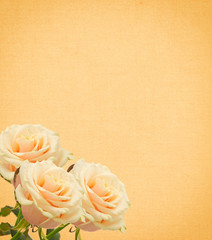 Postcard with elegant roses